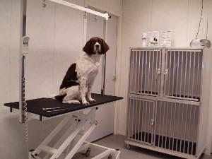 Behandelruimte hondensalon Ivou