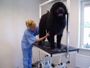 hond-behandeling