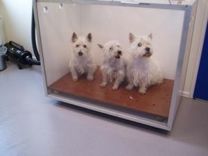 Honden in droogkast